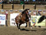 Rowell Ranch Rodeo - 23 by Nyaorestock