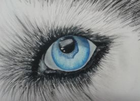 Wolf's Eye by DemonRed6