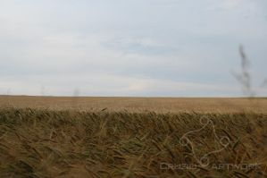 Wheat Sea by Cruzio