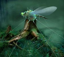 fixed dragonfly by indojo