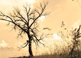 Lonely tree by aby192