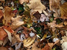 The Leaves Have Fallen _ 5 by Bound-By-Leather