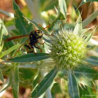 Another wasp by Jorapache