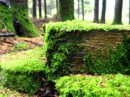 Moss stump by 212Stock