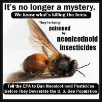 Bees, killed by neonicotinoid insecticides by uki--uki