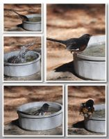 Bird Bath 10-21-10 by Tailgun2009