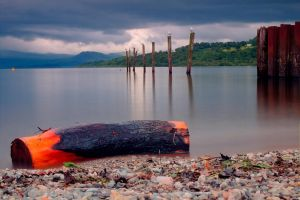 Log washed up on Loch Lomond by vzzzbux