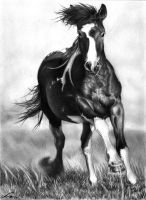 Galloping In The Wind by xuanite