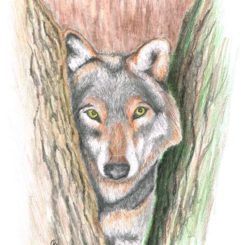 Wolf1 by donaldhoward58