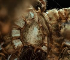 the Inside of a spider by pfrancke