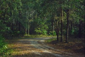 Forest path STOCK Background by KarahRobinson-Art