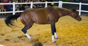 STOCK - 2014 Total Equine Expo-12 by fillyrox