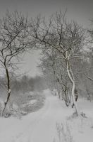 My Winter Wonderland 2 by Amalphi