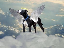 All Dogs Go To Heaven by TheReapersApprentice