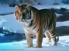 Tigre des Neiges by Romantar