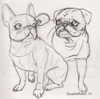 French Bulldog and Pug by SweetyTeety
