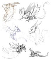 Dragon Sketches by AbelPhee
