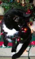 Holiday Kitty Oh Likey a light by Melrainbow