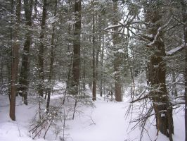 Winter Pine Forest by Kieran89