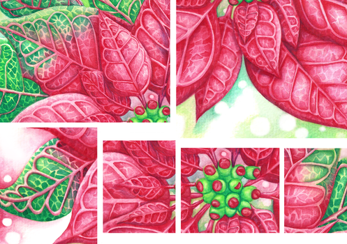 Poinsettia Details by ScribalWriter