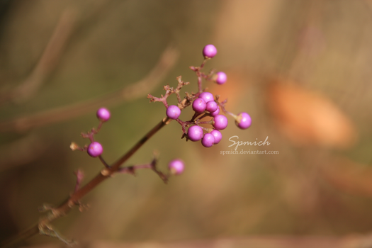 Pink in nature by spmich