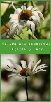 Wilted and Imperfect Daisies by stockinthecorridors
