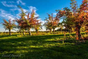 bright fruit trees by danielbierstedt