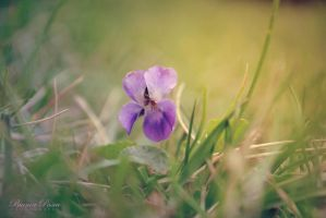 The First Violet by sibeworld