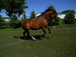 Horse Stock 12 by Amber-Loves-Horses