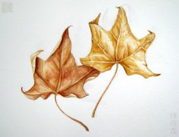 Leaves by cambium