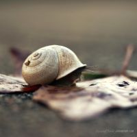 Lonely Snail by PiecesOfAnsley