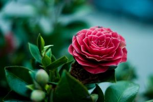 Flower by pauc1988