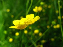 small and yellow by pemmi