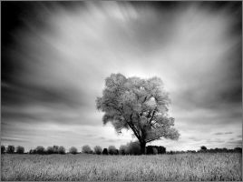Home Tree V infrared... by MichiLauke