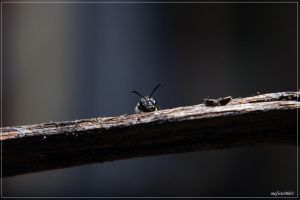 bee by mefisto0603