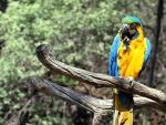 parrot by Clergna