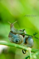 I Am  Mr. Snail! by LuanaRPhotography