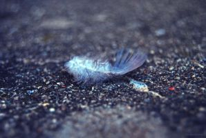 feather by littlepieceofyehet