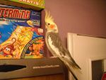 Parrot likes games :D by Engordia