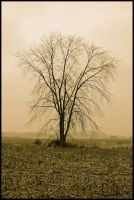 Sepia winter tree.L1010362 1 1 by harrietsfriend
