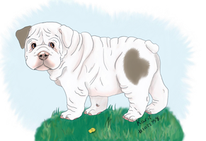 Bulldog Puppy by DoggieDoodles