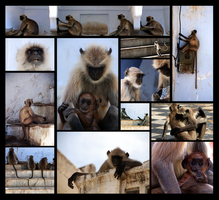 Monkeys by Jtrauben
