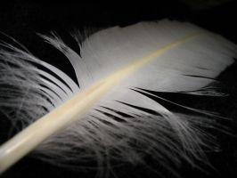 feather.2 by twofortheprice