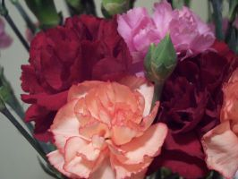 Carnations by Liquid-angelicGrace
