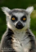 Ring Tailed Lemur Portrait by Shadow-and-Flame-86