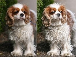 dog enhancement by uktilly