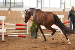 Freejumping Geyer 2014_89 by CalyHoney