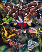 Moths and Butterflies by DanMcManis