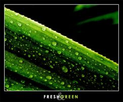 Fresh and Green by vikingexposure