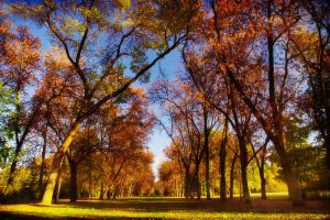 Fall Trees by Justine1985